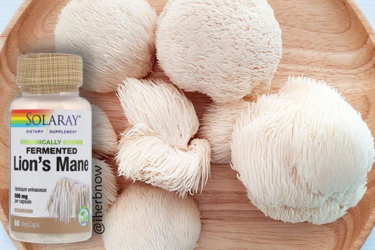 Read more about the article Обзор гриб львиная грива Lion's mane | ежовик гребенчатый